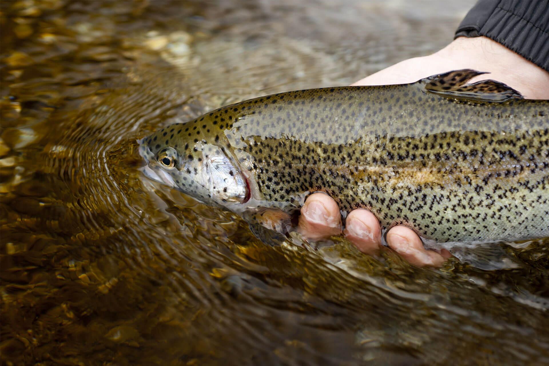 Les nouvelles sur la pêche pour le dernier jour
