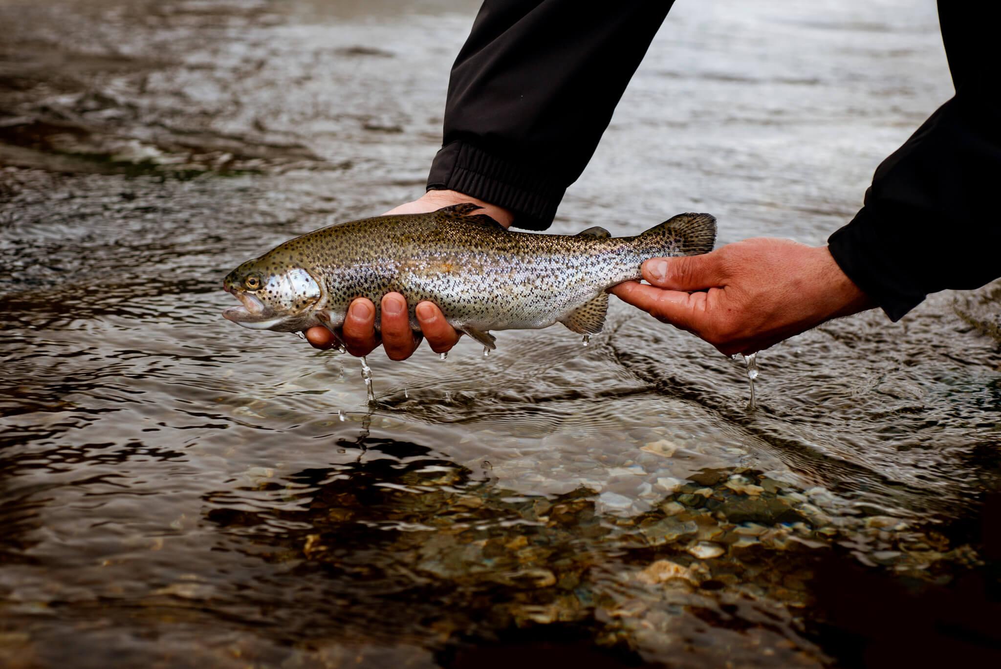 La pêche avec la résidence sur rouze