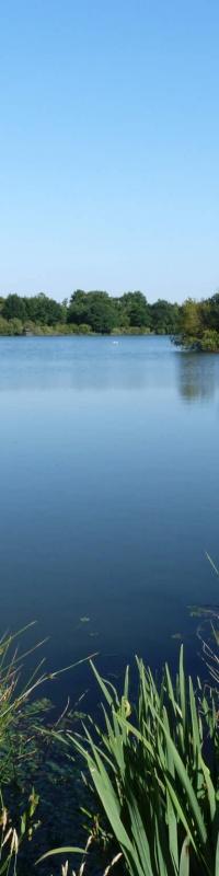 Lac de Padouens, à Blanquefort