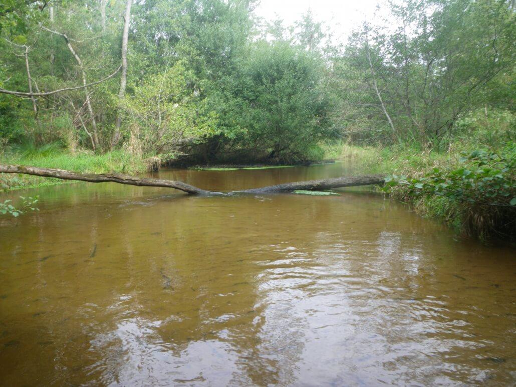 Plan Lacanau De Mios les rivières autour du bassin d'arcachon - peche33