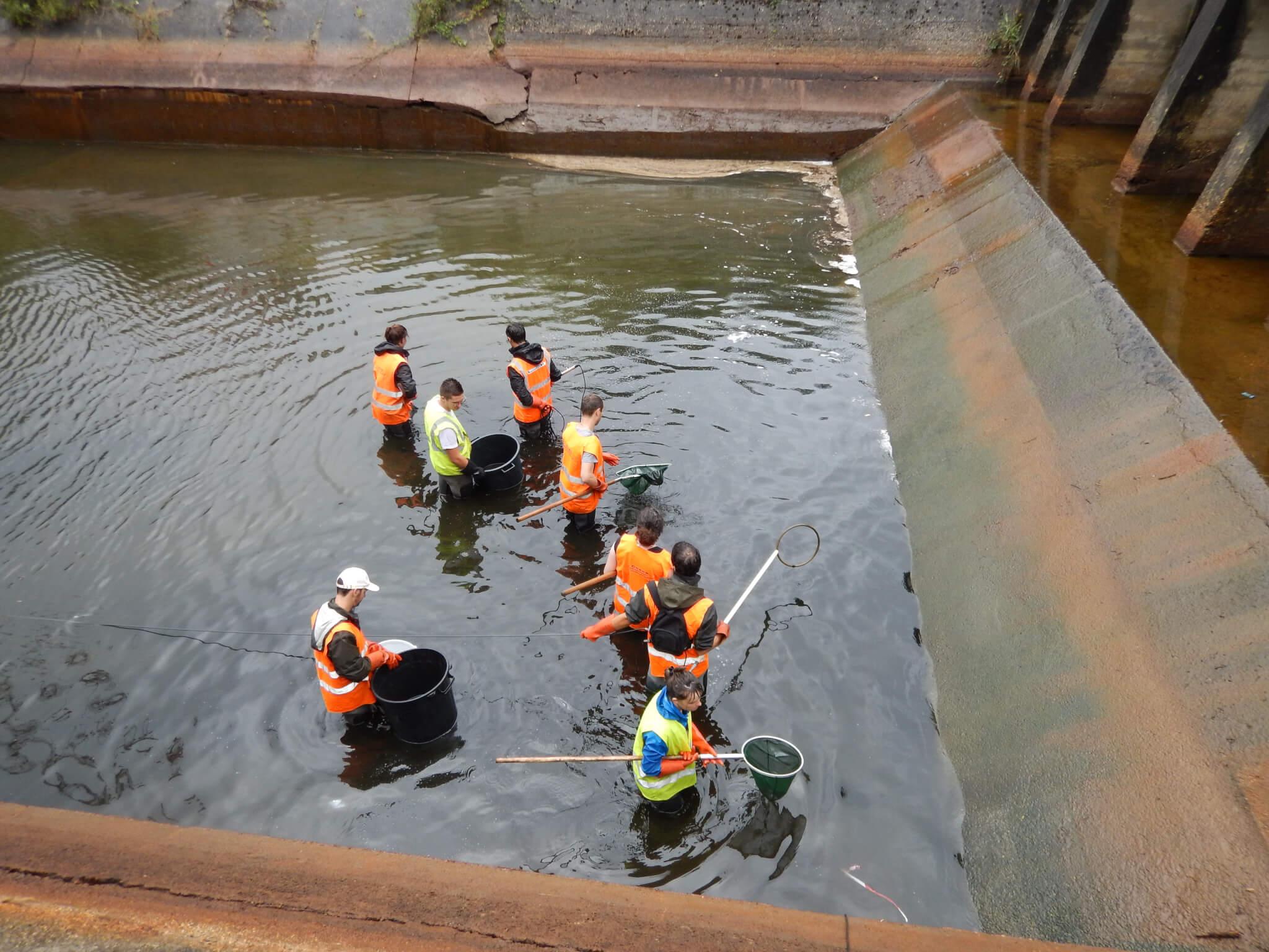 Pêche électrique de sauvetage