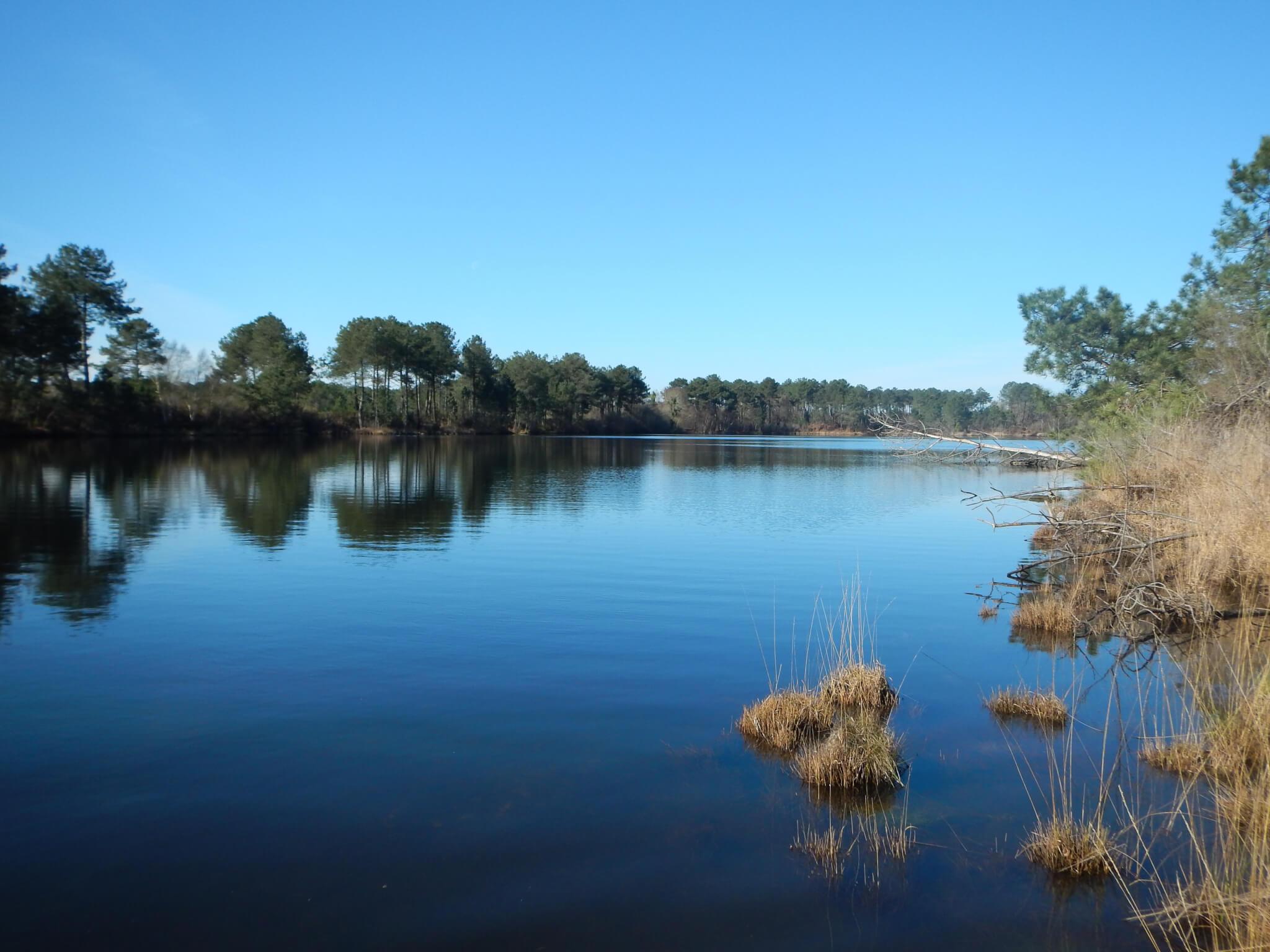 Rives du lac du petit Bernadas