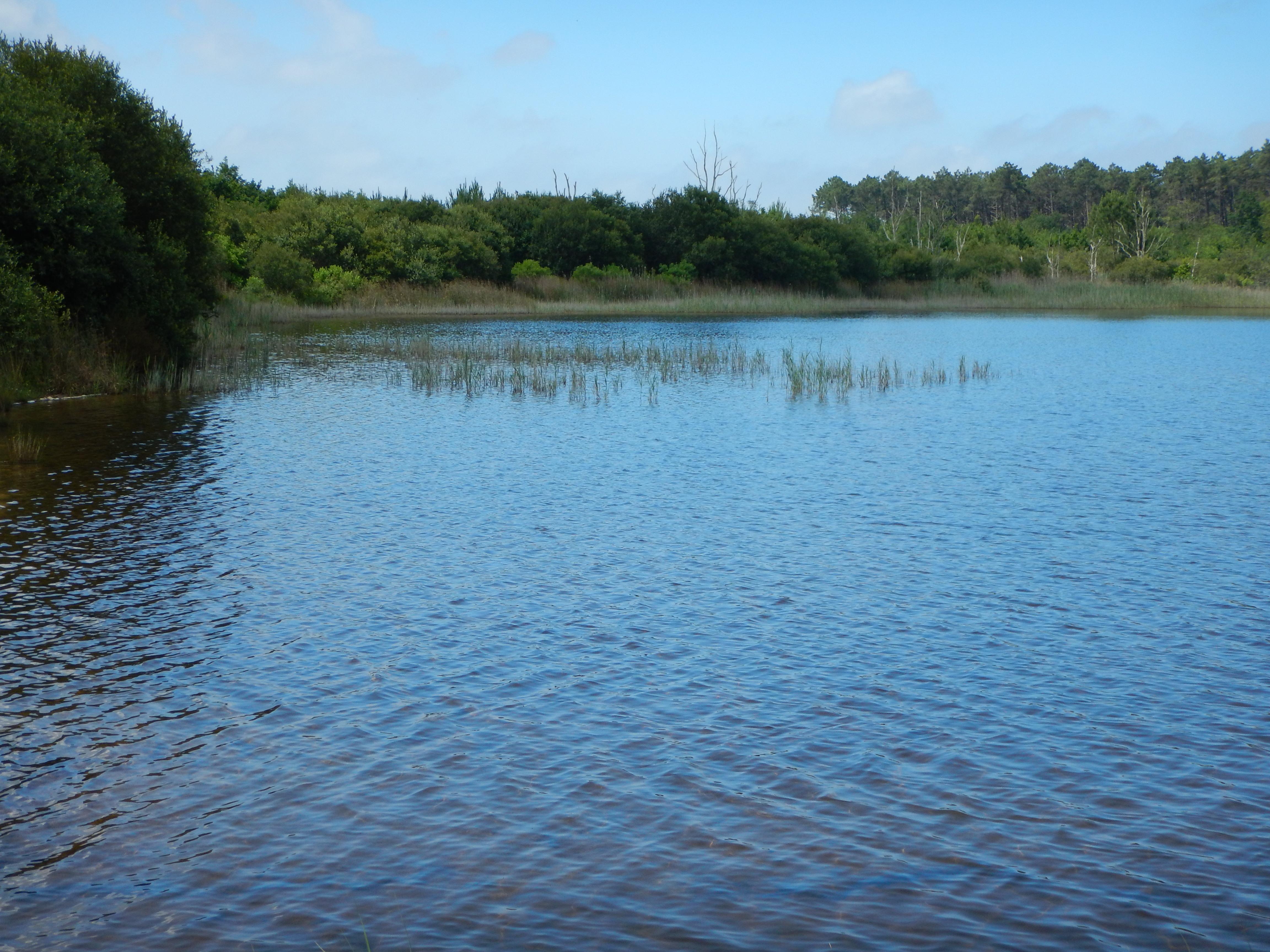 étang langouarde