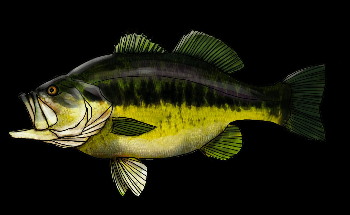 Le black bass