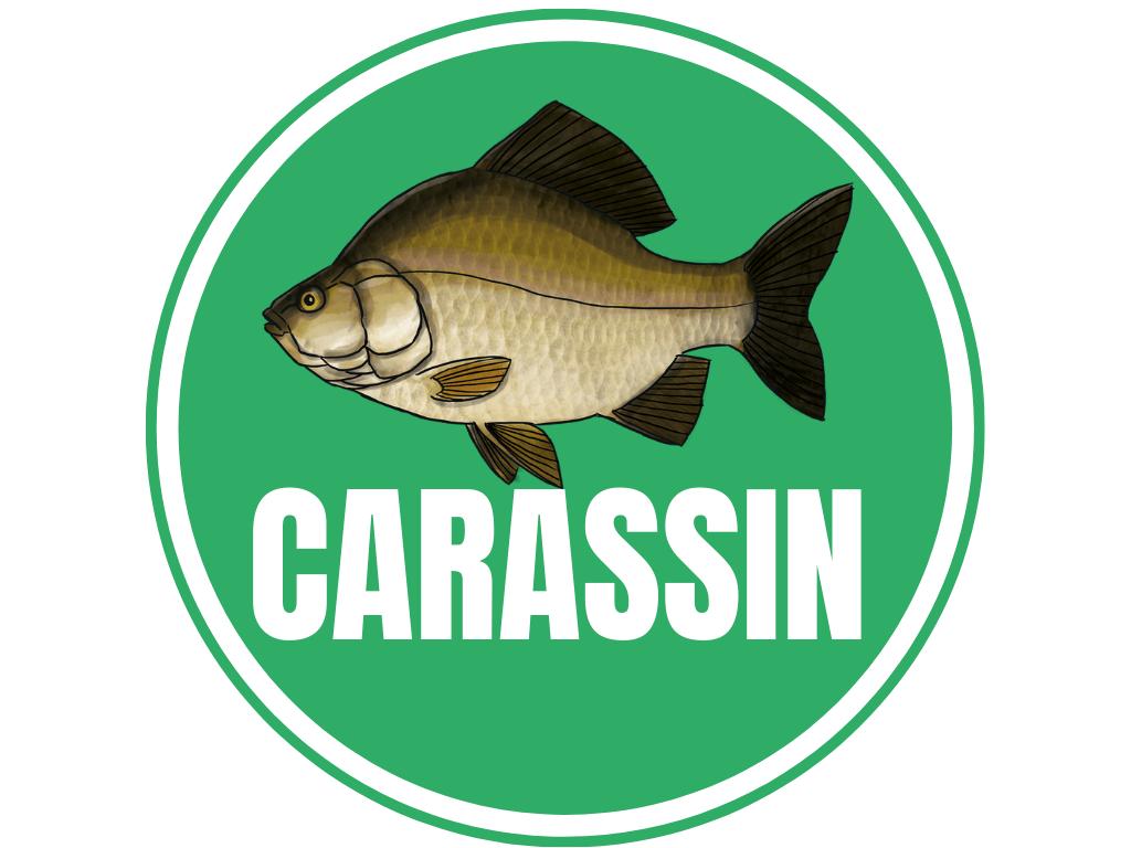 CARASSIN
