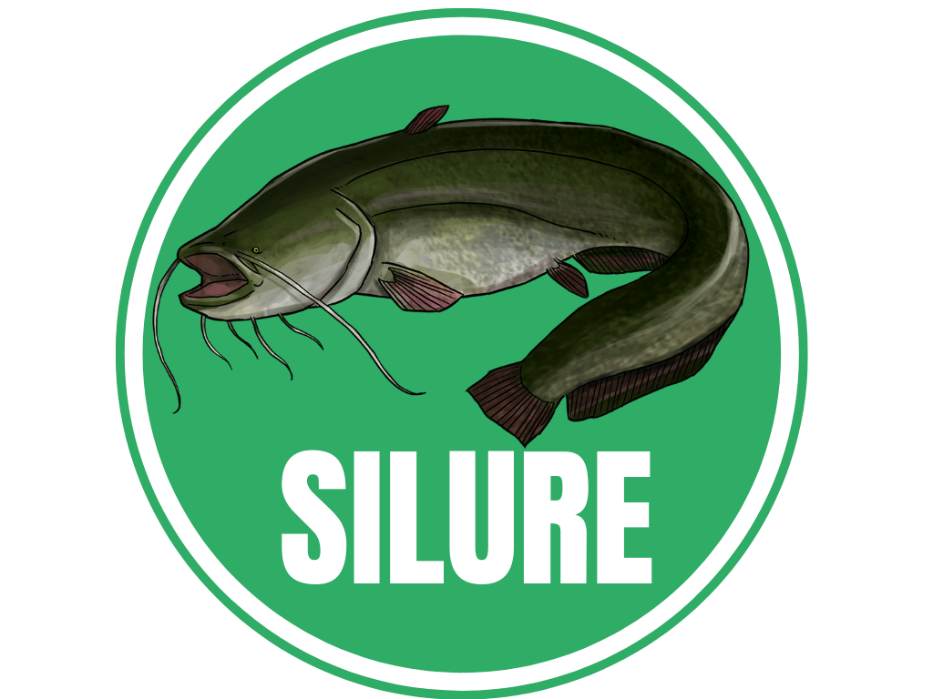 silure