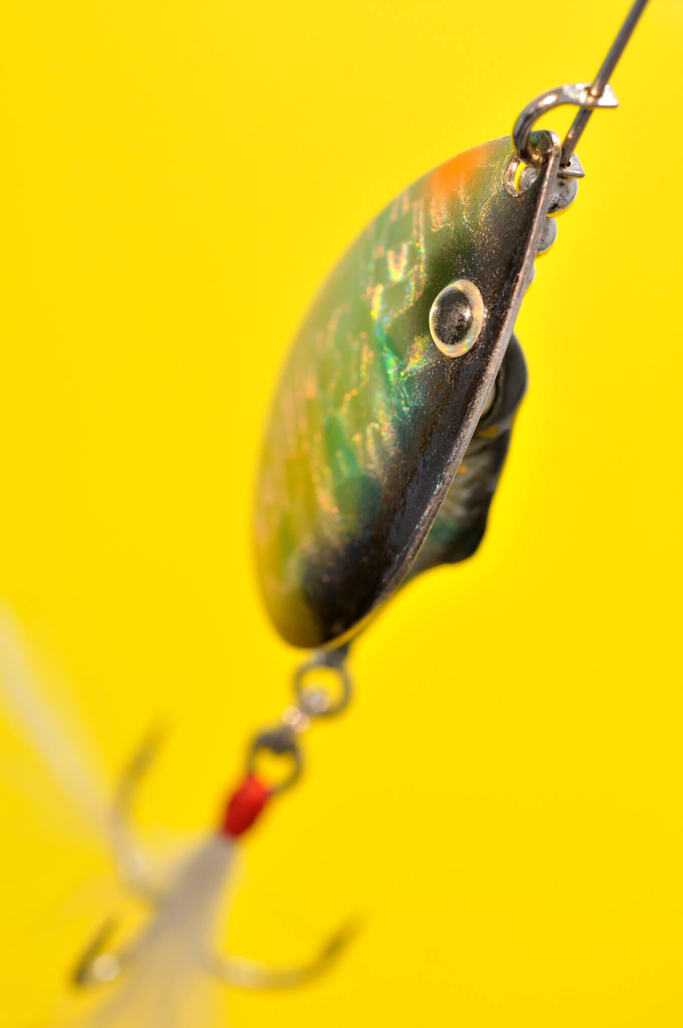 pêche alose