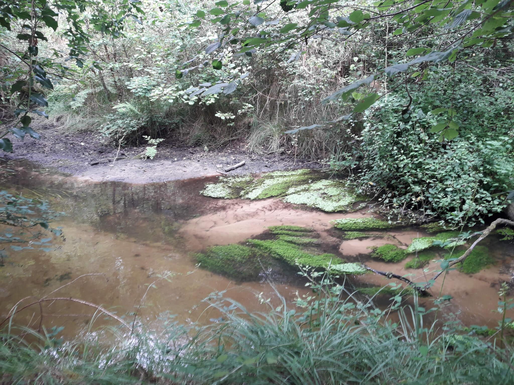 Le ruisseau de la Paillasse en amont de Belin-Beliet