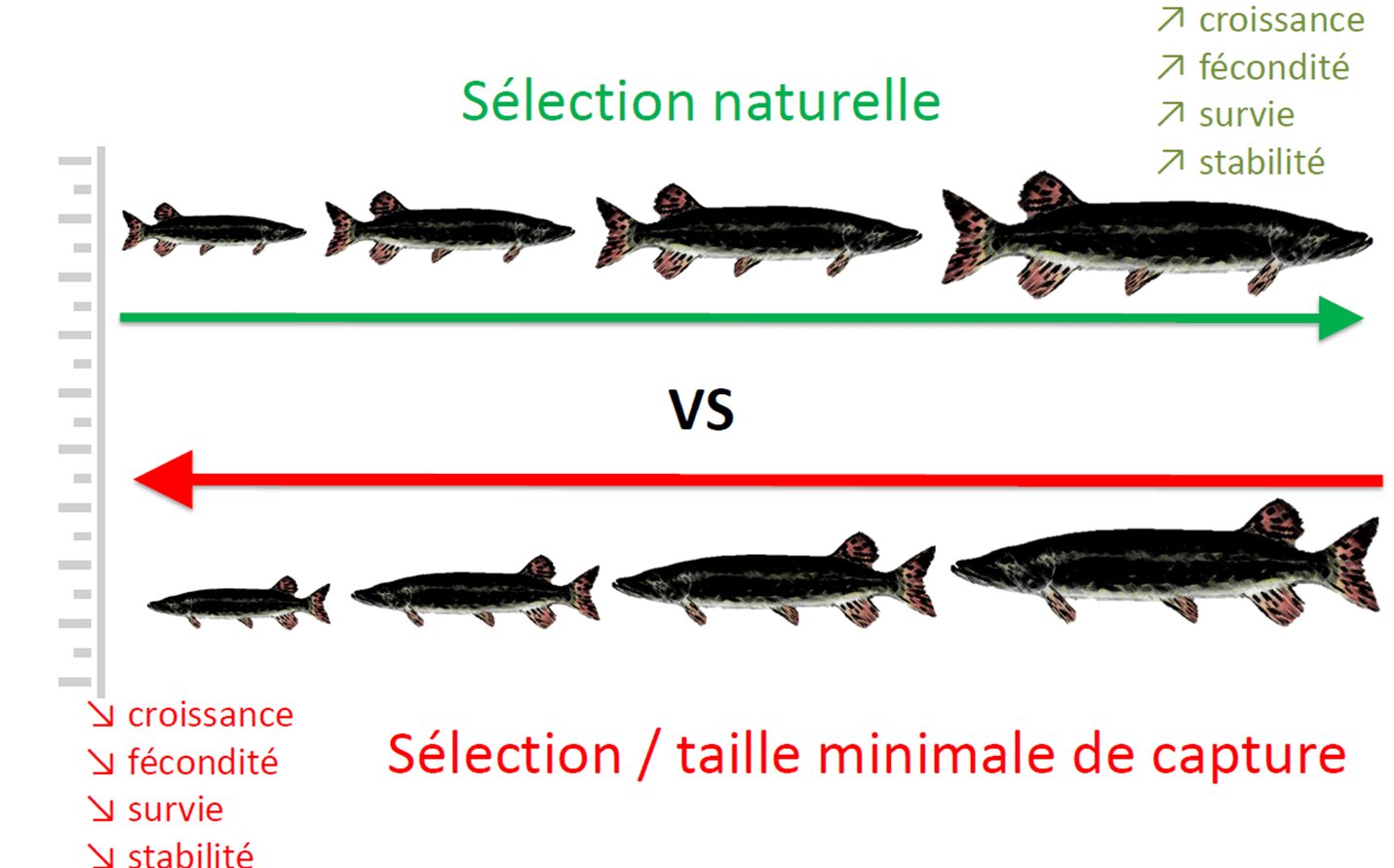 Source : FDAAPPMA 69, Jean-Pierre FAURE