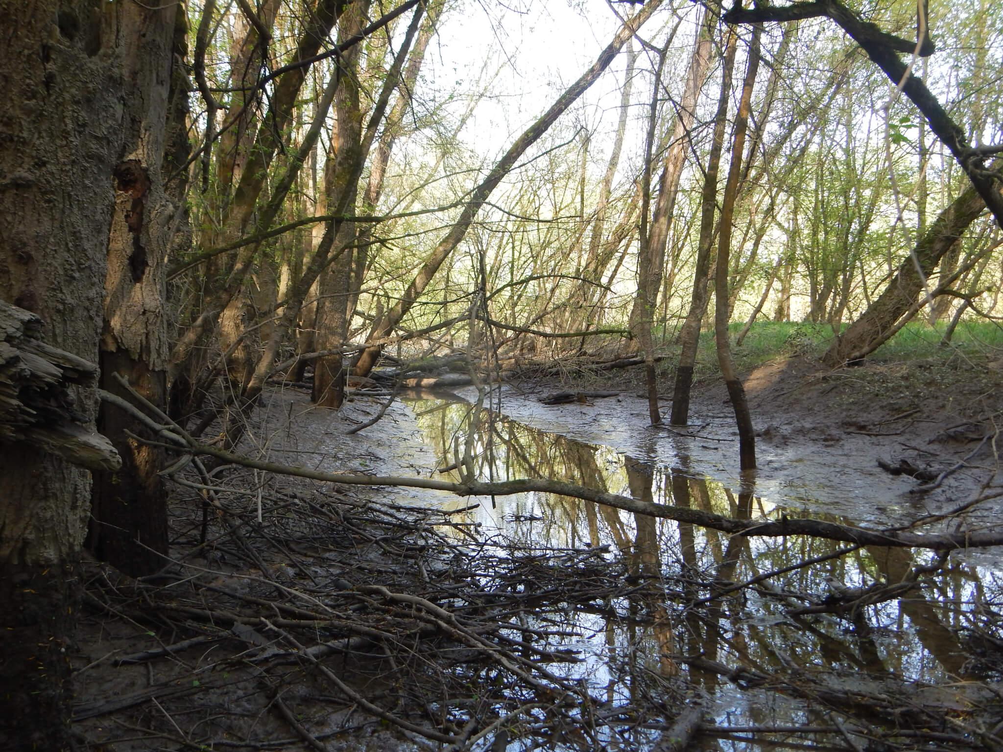 l'annexe hydraulique encombrée par les bois