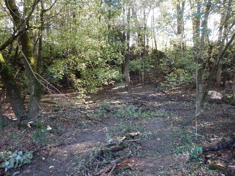 Après l'enlèvement des troncs d'arbres morts gênants dans l'annexe hydraulique