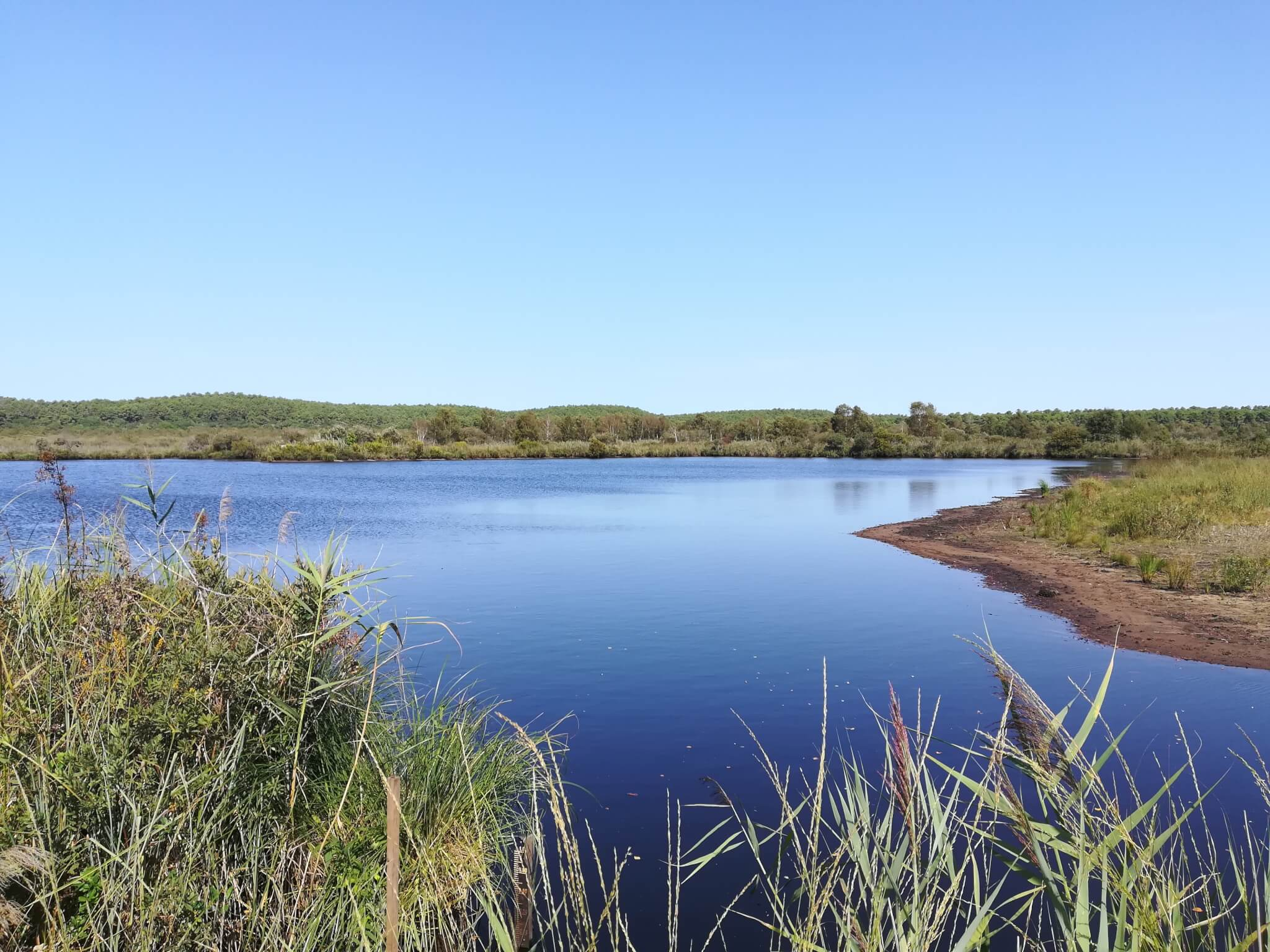 Lagune d'Emilie, sur la Réserve des Dunes et Marais d'Hourtin