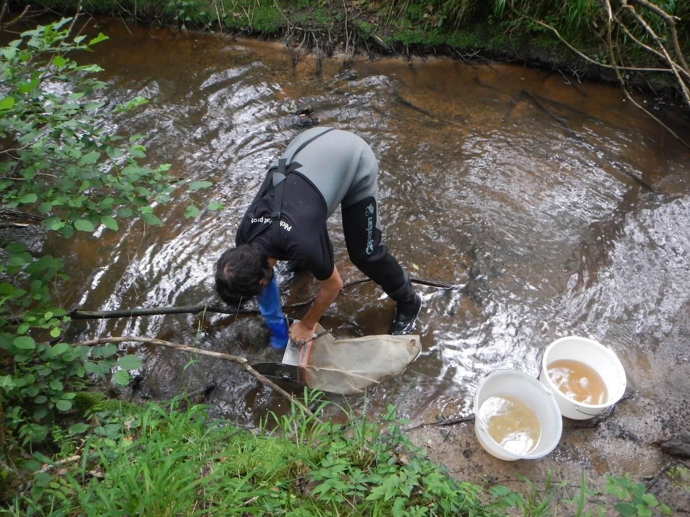 Prélèvement de macro-invertébrés en rivière