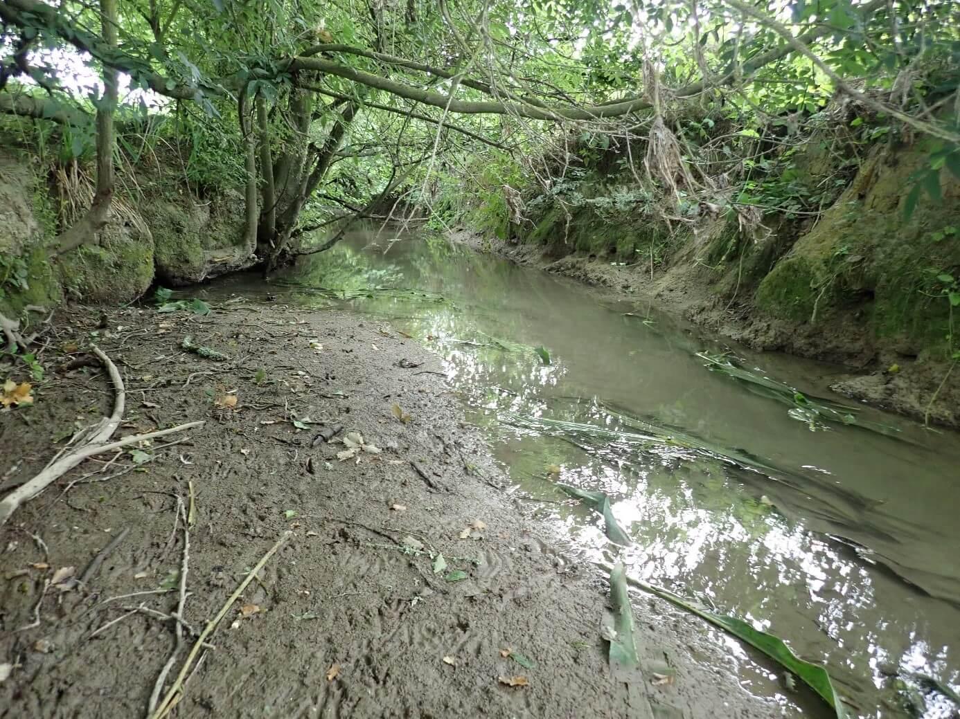La Vignague à Sauveterre-de-Guyenne, un cours d'eau très dégradé qui montre une légère amélioration en 2019
